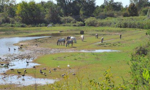 Prírodná rezervácia ostrova Cona a divoké kone