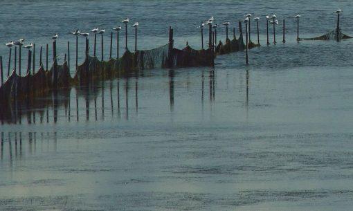 Rybárske siete a čajky v lagúne Grado v Taliansku